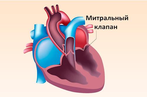 Здоровый митральный клапан