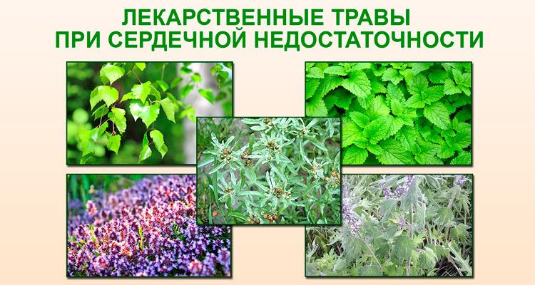 Лекарственные травы при сердечной недостаточности