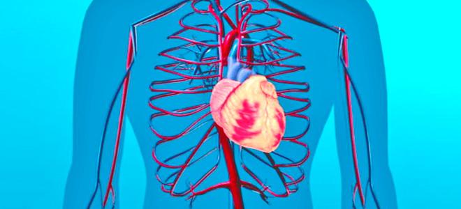 Факторы риска развития гипертонической болезни