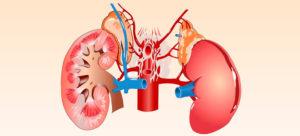 Почечная гипертония: механизм развития, диагностика и лечение заболевания