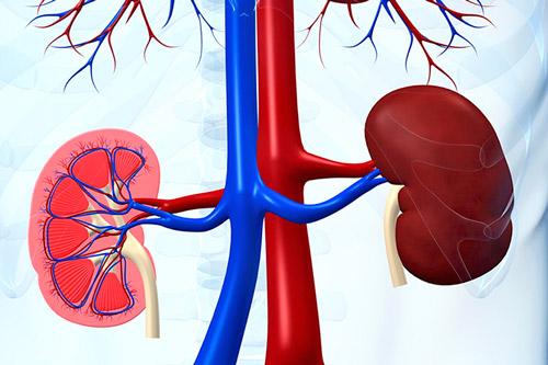 Что такое реноваскулярная гипертензия