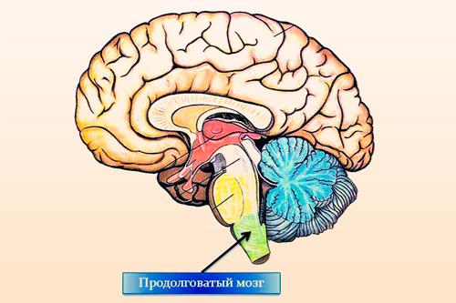 Отдел ствола головного мозга