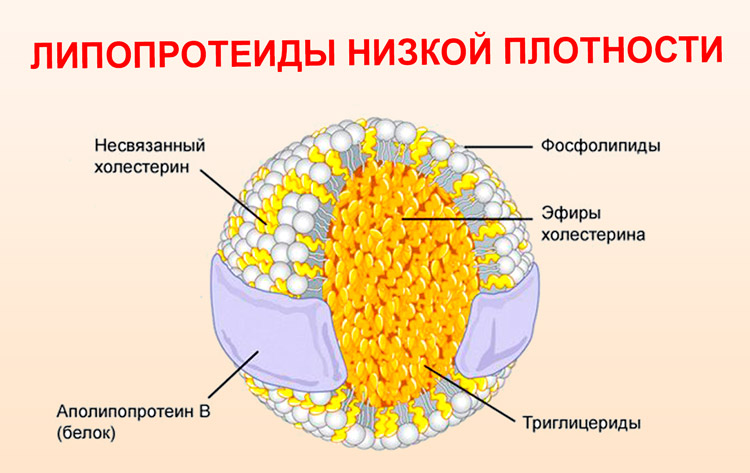 Липопротеиды низкой плотности