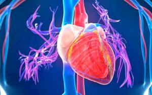 Что такое кардиопатия у взрослых