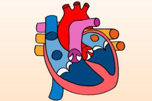Регургитация митрального клапана: симптомы и стадии