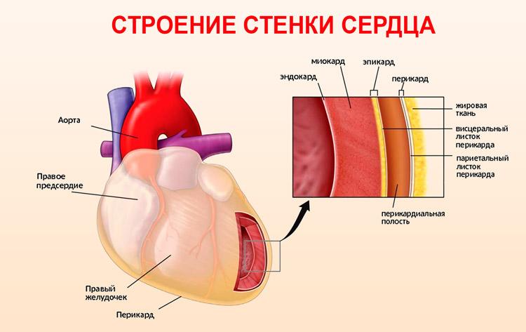 Замирание сердца: что это такое, причины, что это значит, работа с ...