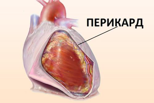 Внешняя оболочка сердца