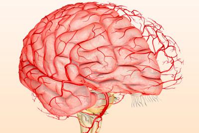 Тонус артерий в голове