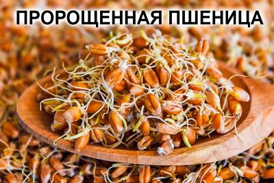 Пророщенные зерна пшеницы