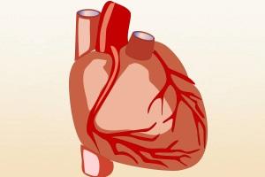 kardiomiopatiya chto ehto takoe1 - Зошто се јавува кардиомиопатија, што е тоа и каков третман