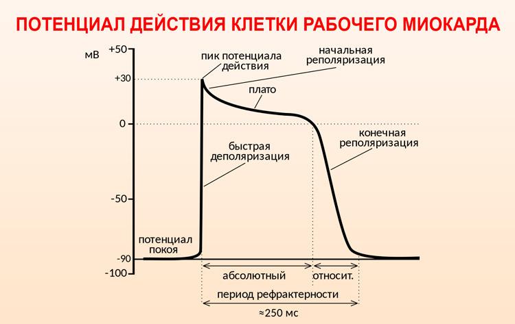 Нарушения реполяризации миокарда