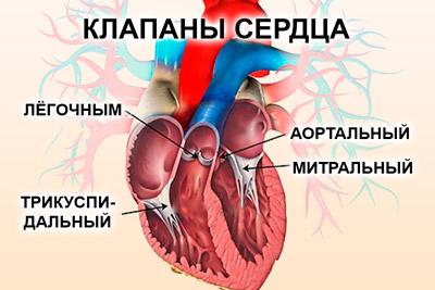 Сердечные клапаны
