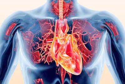 Пороки сердца – виды, причины и лечение