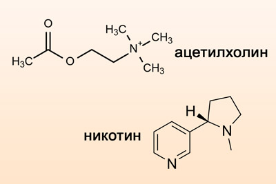 Формулы ацетилхолина и никотина