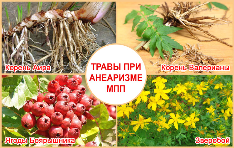 Лечение аневризмы МПП травами