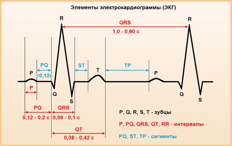 Элементы кардиографии