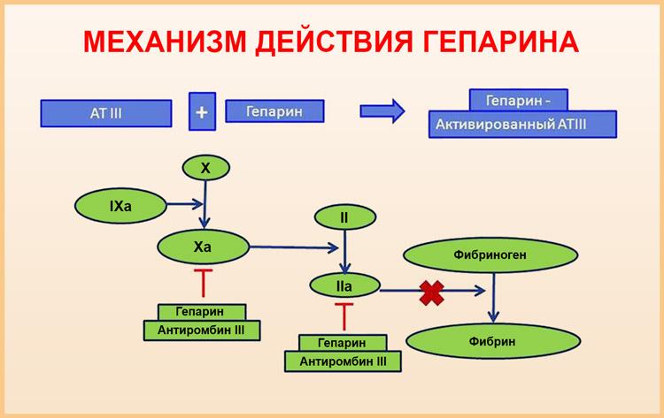 Механизм действия гепарина