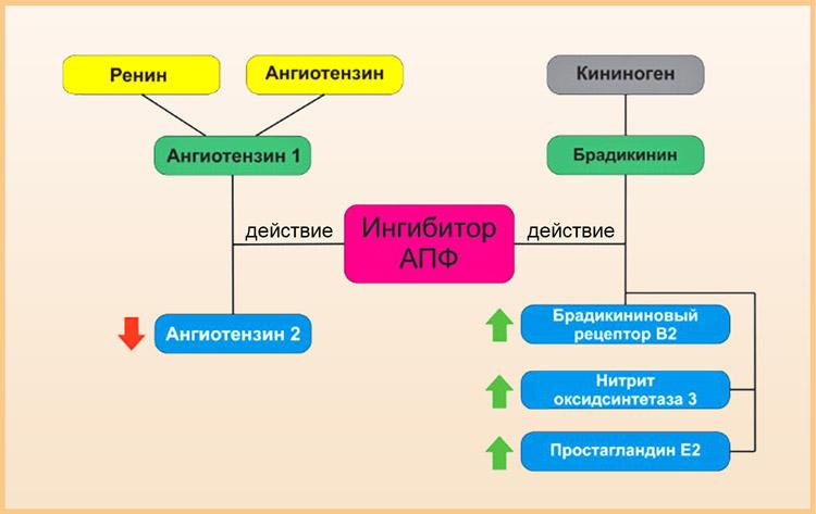 Как действуют иАПФ