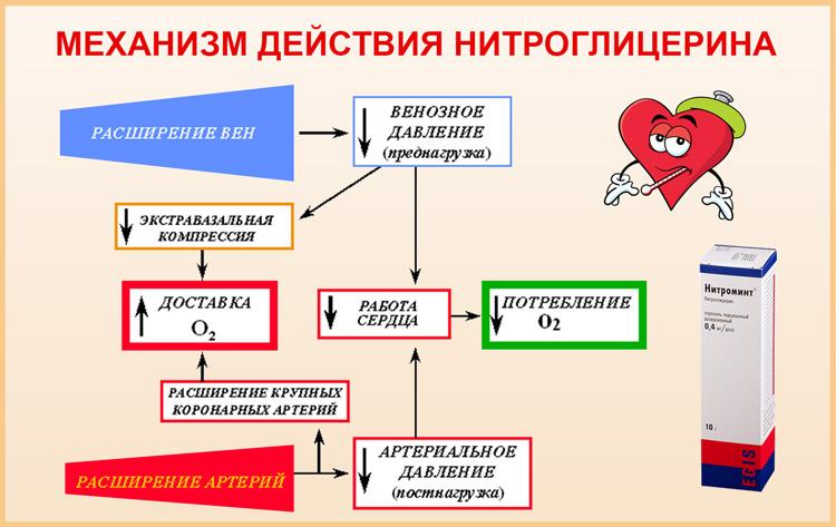 Действие Нитроглицерина
